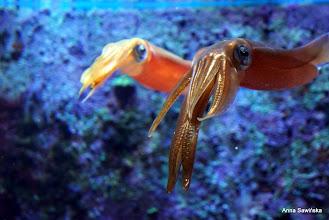 Photo: Squid