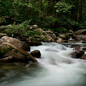 Big Creek, smoky mountains national park by Brook Kornegay - Landscapes Waterscapes ( running water, stream, park, brook, waterscape, silky water, creek, tennessee, landscape, woods, smoky mountains,  )