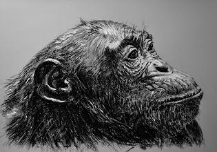Photo: Hembra de chimpancé, Pastel