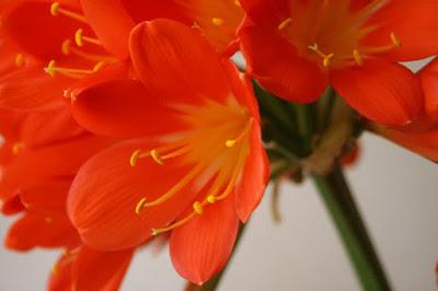Orange di Essence