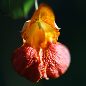 by Lee Chase - Flowers Single Flower