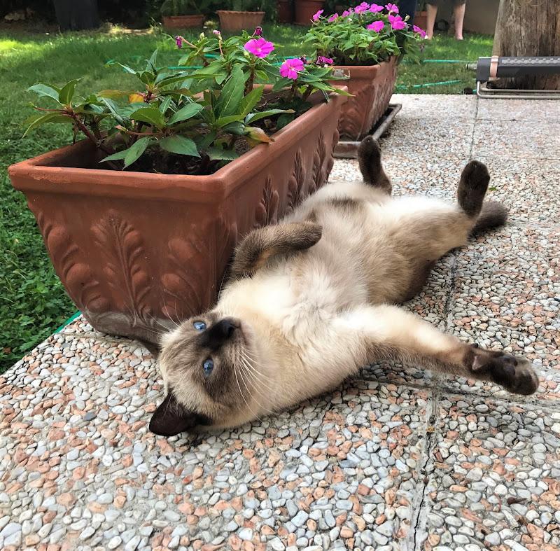 Lasciatemi riposare PLEASE di Laucol