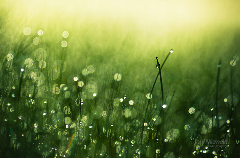 Photo: One summer morning and some dew on grass. #PlusPhotoExtract Have a great weekend everyone!