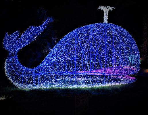 Balenottera.....azzurra di MORENO ANTOGNOLI
