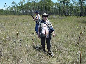 Photo: Brian and Irmgard with Sarracenia flava ssp. rubricorpora near Sumatra (Florida Panhandle).