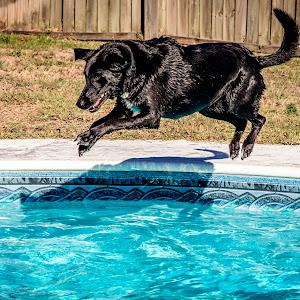 5 baxter jumping (624A8729) February 10, 2017.jpg