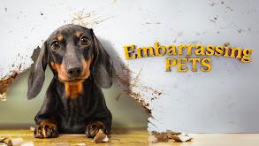 Embarrassing Pets thumbnail