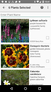 Rhode Island Wildflowers- screenshot thumbnail