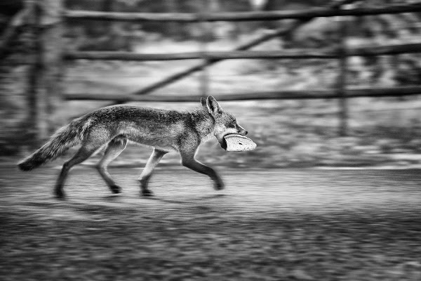 furto con destrezza di bi