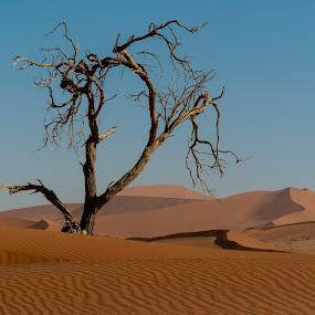 Dead Tree by Johan Jooste Snr - Landscapes Deserts ( sossusvlei, sand, dunes, desert, tree, dead, namibia )