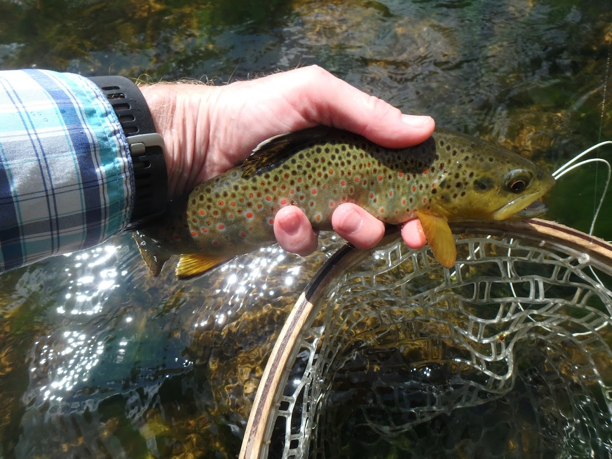 St  Vrain Creek   Dave Weller's Fly Fishing Blog