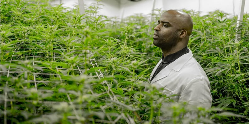 https://diyhealthacademy.com/former-nfl-player-ricky-williams-launches-a-medical-cannabis-brand/
