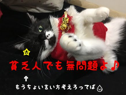 猫のクリスマスコスプレと可愛いねこのかぶりもの6選