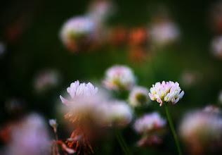 Photo: #flowers  #flowerphotography
