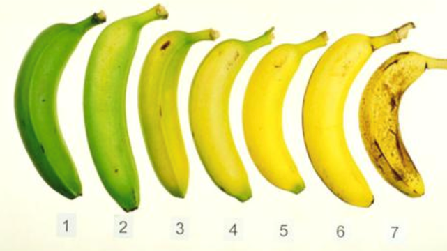 Bananas in various stages of ripeness are shown, with a number below each banana.