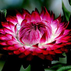 by Kanchan D - Flowers Single Flower