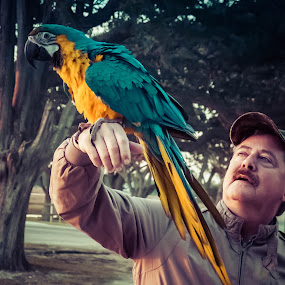 Chico and the Man by Jeff Dugan - Animals Birds ( bird, pet, sunset harbor, mccaw, chico )
