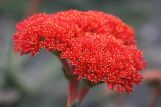 Photo: im Botanischen Garten Wellington