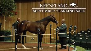 Keeneland September Yearling Sale thumbnail