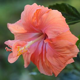 by Carmen Quesada - Flowers Single Flower