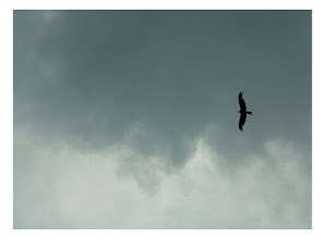 Photo: One of my favorite clicks.. Make me wanna fly..or atleast sky-dive