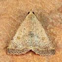 Variable snout moth