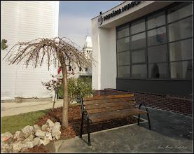 "Photo: Cires pendul (Prunus Avium ""Pendula"")  - din Turda, Piata 1 Decembrie 1918, spatiu verde  - 2019.03.01"
