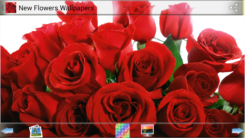 android New Flowers Wallpapers Screenshot 0