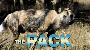 The Pack thumbnail
