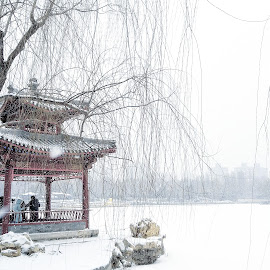 Snowy serenity  by Francisco Little - Instagram & Mobile Android ( china, white, snow, pavilion, cold, beijing, park )