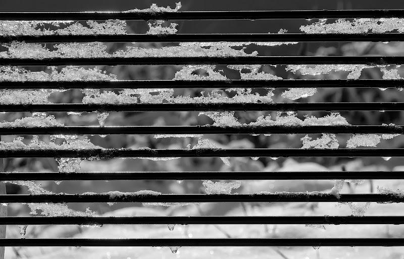 Righe ghiacciate di Mauro Cestaro
