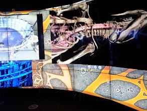 Photo: A tour of the rat's insides.  Imagery courtesy of UIC EVL, CALIT2 UCSD, Australian Synchrotron, KAUST, and Monash University