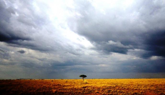 L'acacia solitaria di mosquita79