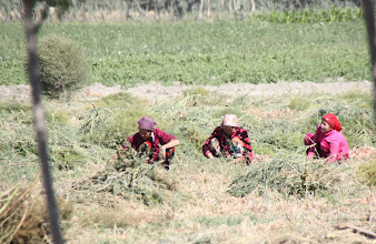 Photo: Day 166 - Between  Samarqand and the Border- Working in the Fields #2