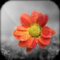 Color Splash - Photo Color Pop 📷 & Photo Recolor APK