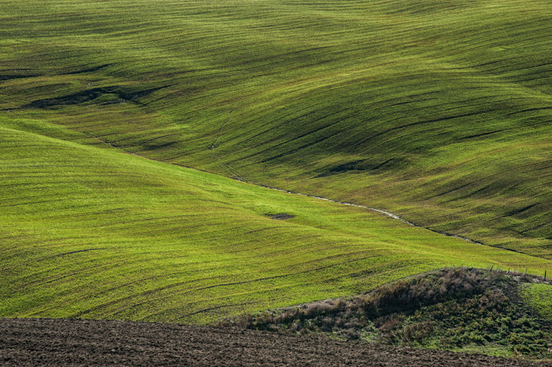 Verdi diagonali di laurafacchini