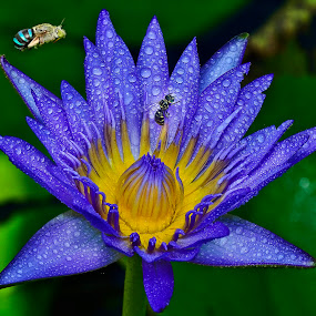 by SweeMing YOUNG - Nature Up Close Flowers - 2011-2013 ( plant, nature, flora, water lily, flower, petal, watter lilies,  )
