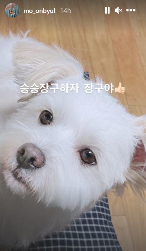 moonbyul dog 2