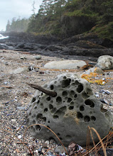 Photo: Rocks, shells, driftwood, wonder all. Beauty in the everyday and learning how to see...