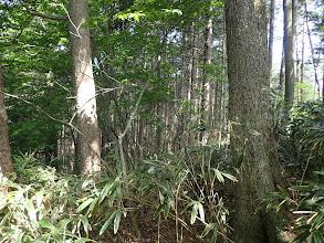 右斜面は植林