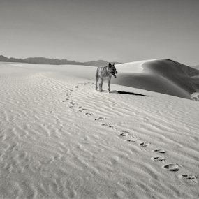 Onward  by Michael Keel - Black & White Landscapes ( sand, dunes, desert, white sands national monument, sogs, new mexico )