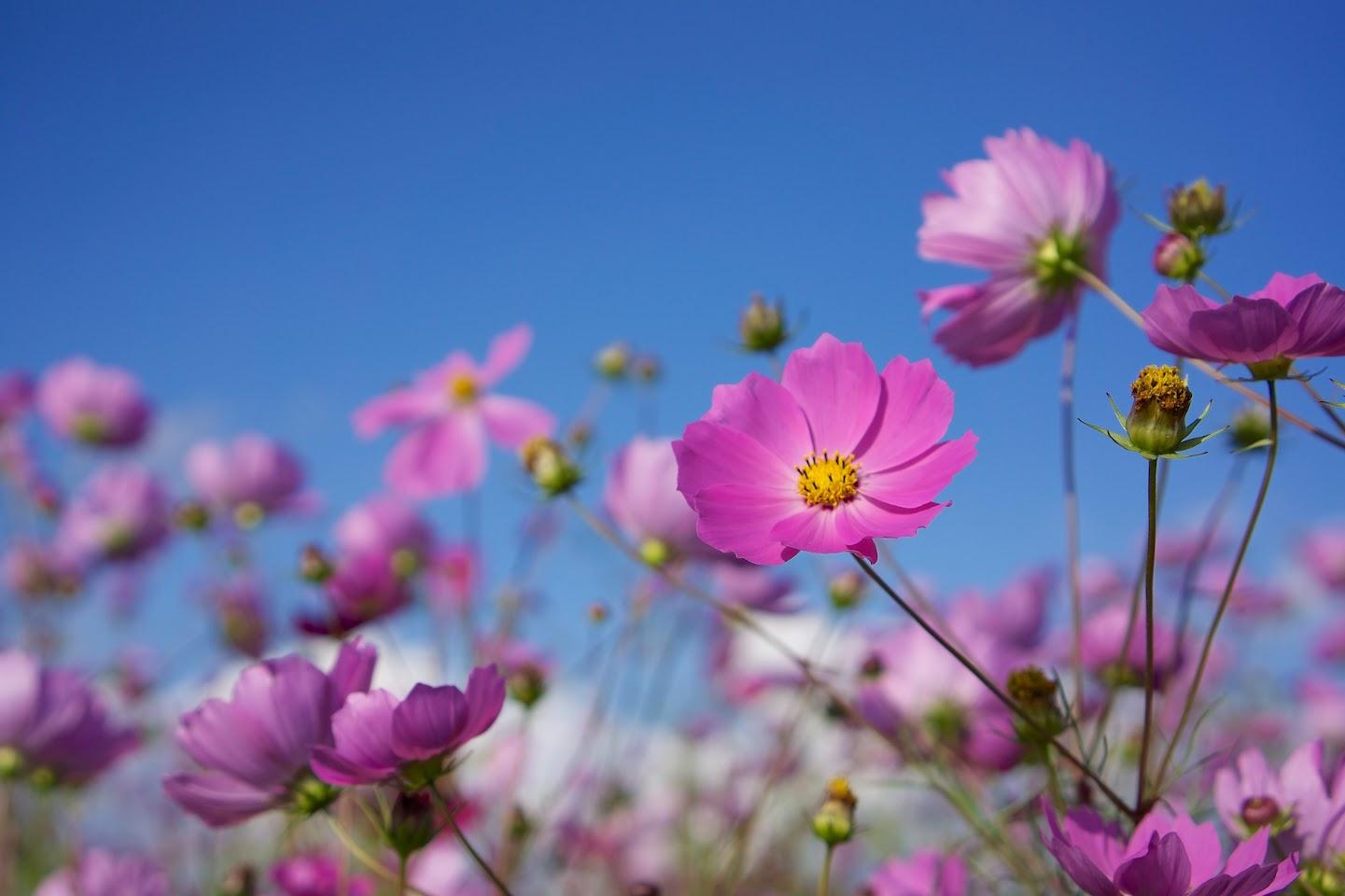 ブルーとピンクの可憐な世界
