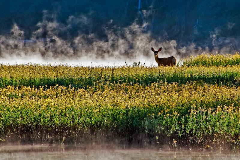 Photo: Ooohhh Deer! He's really thinking Breakfast.... Sparks Lake Oregon
