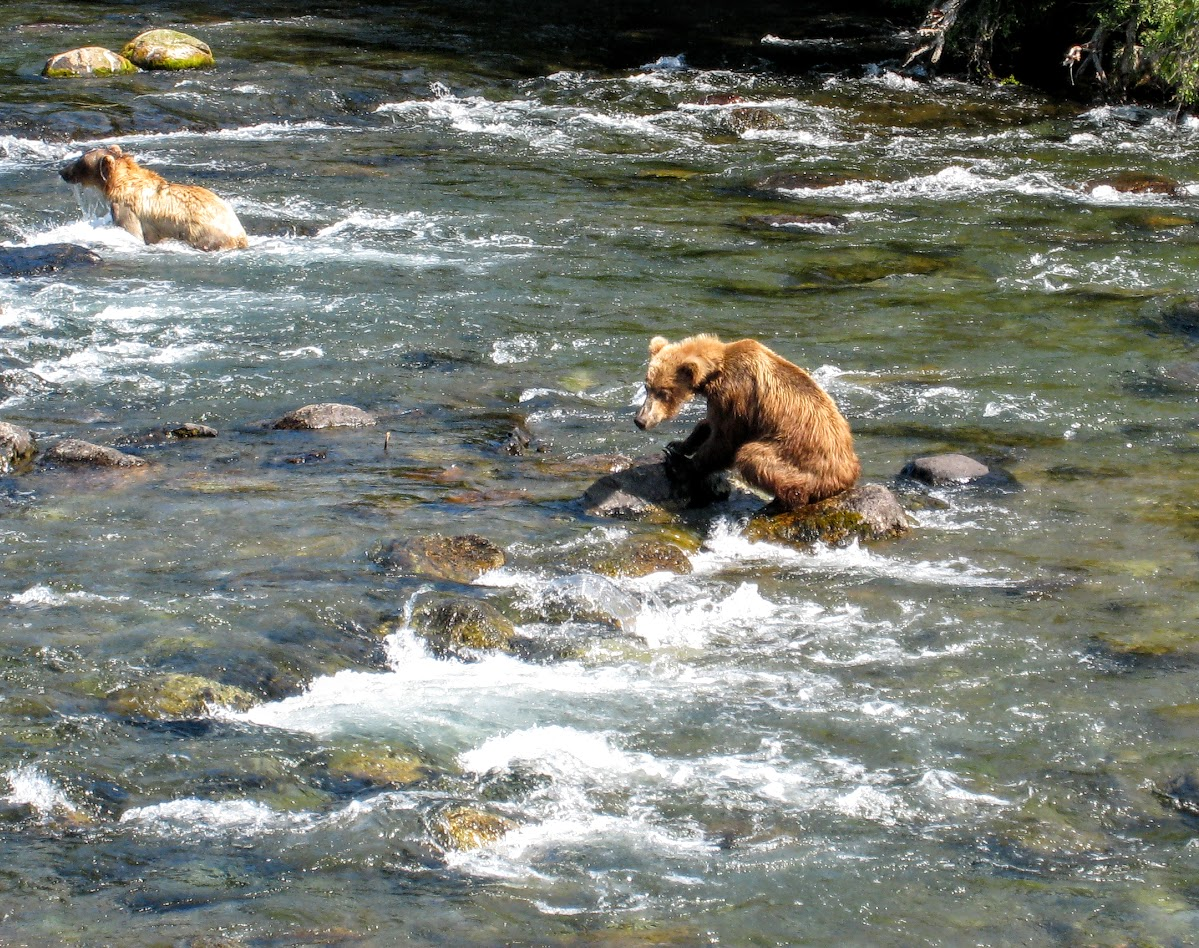 Young bear standing on rock