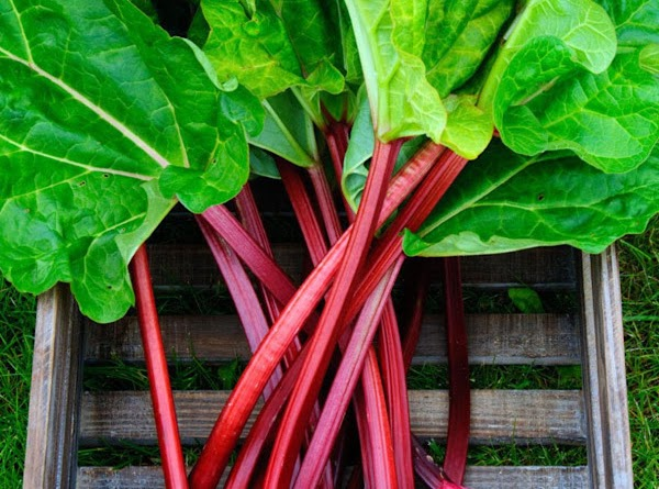 Canning Rhubarb Recipe