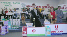 Photo: INT Show Trencin, SK 2nd place with ICh. Al pacino Gandamak judge: Mrs. Hana Ahrens/A Sunday, January 26, 2004