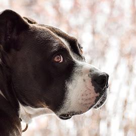 by Jodi Iverson - Animals - Dogs Portraits