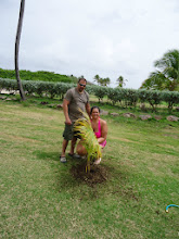 Photo: We also had the joy of recently hosting the new Mr. and Mrs. Reiner for their honeymoon. Julie and John planted a palm tree to celebrate and mark the occasion.
