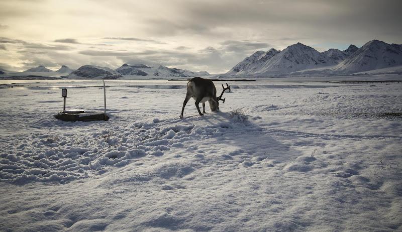 Brucando nella neve di daniele1357