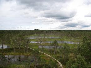 Photo: Lahemaa National Park Estonia - treacherous bog area from Lookout